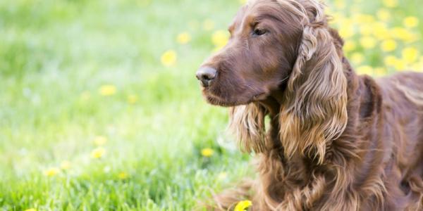 hotel dla psów poznań cennik